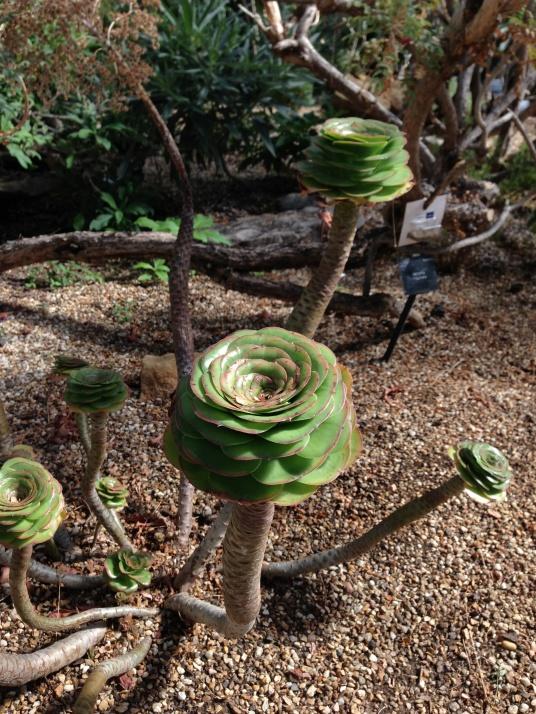 Kew plants