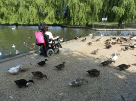 ducks_me