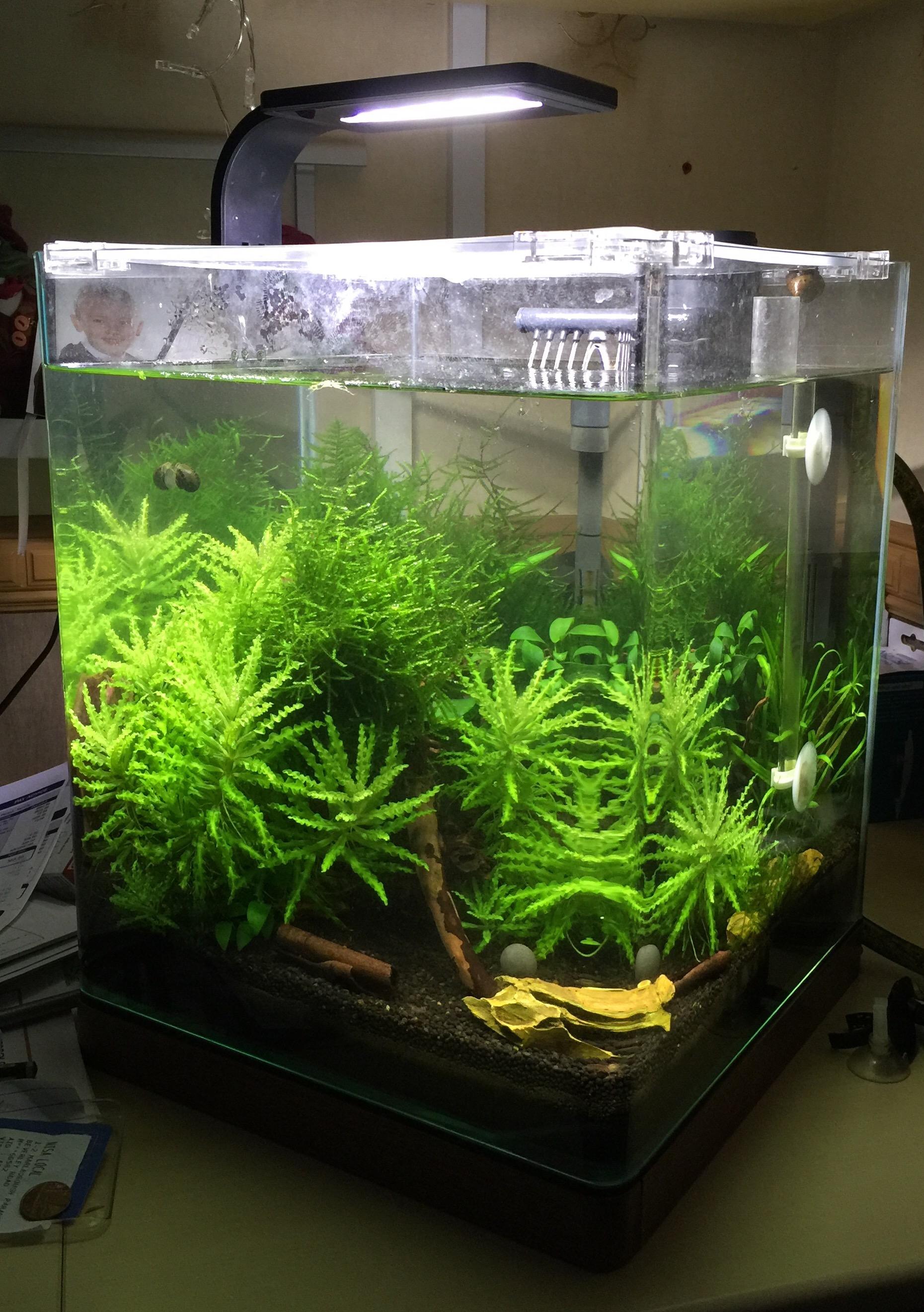 Img Zero Edge Aquarium Plumbing
