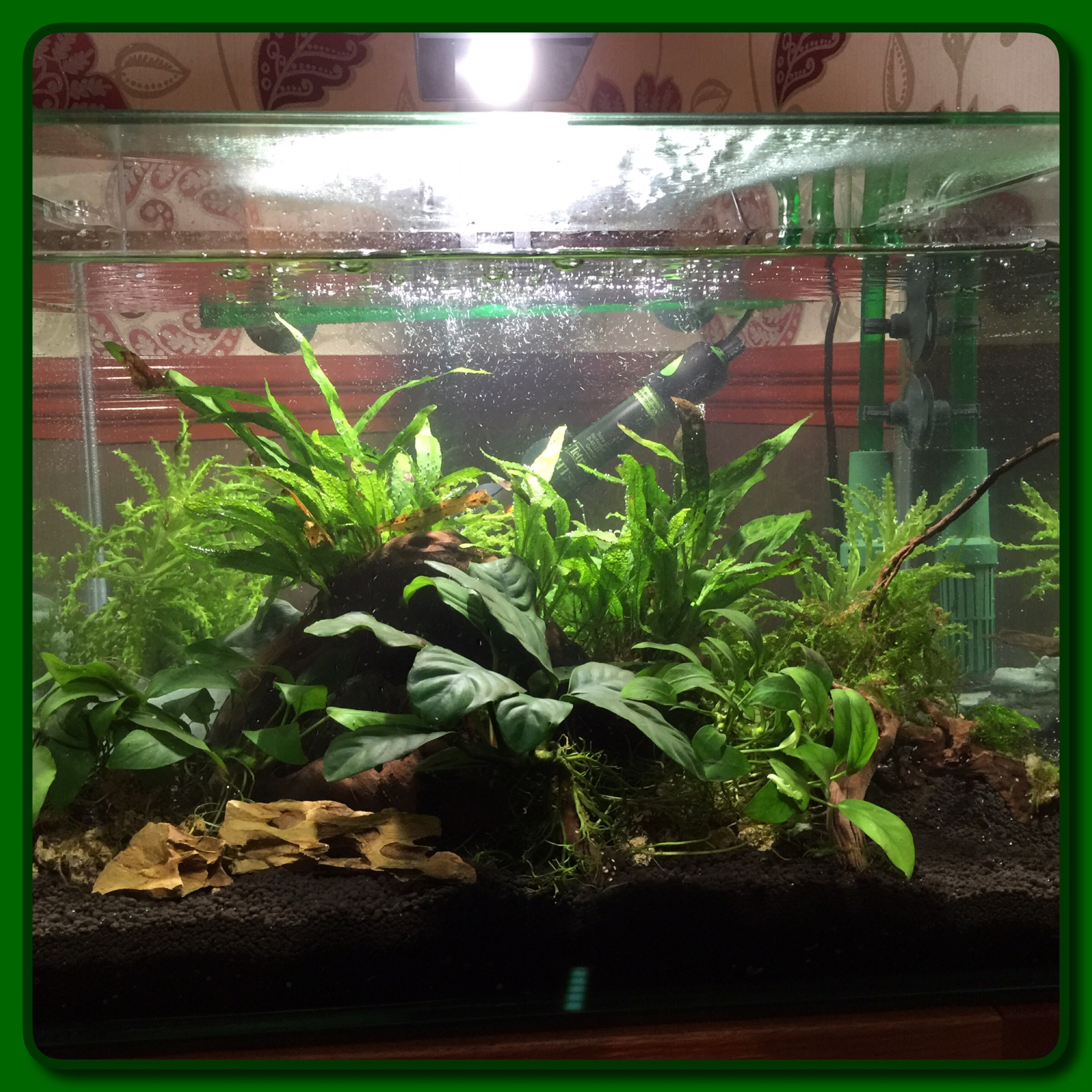 Aquascape criptic thoughts for Planted tank fish